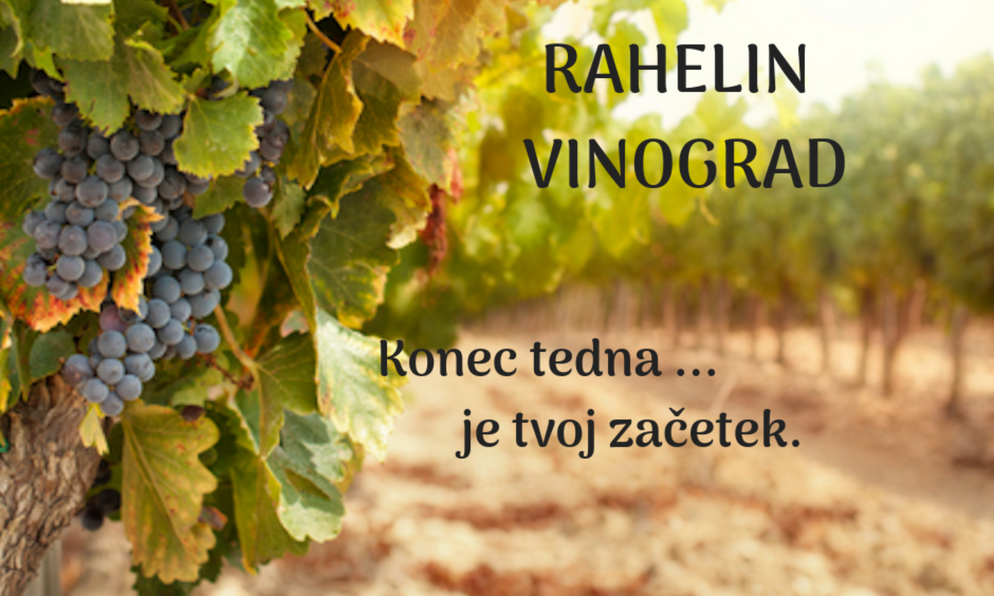 Rahelin vinograd